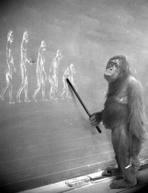 GOP Evolution, Explained
