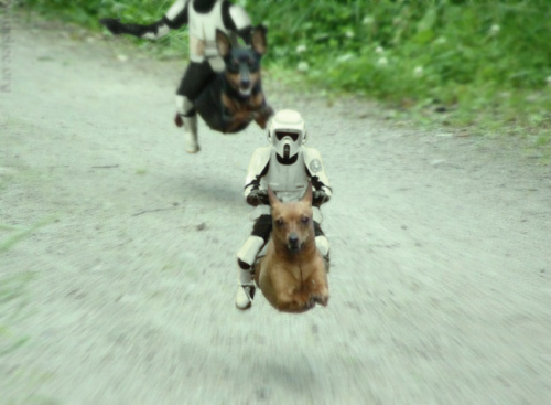 May the Doxie Be With You!