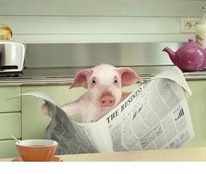 news pig