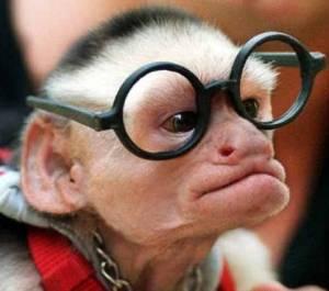 monkey smarts