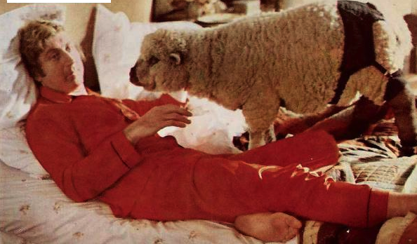 Gene Wilder in bed with a sheep