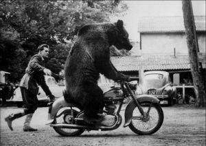 Bear on a 'Bike